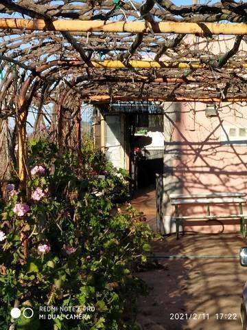imagen 3 de Venta de finca con vivienda y viñedo en El Sauzal (Tenerife)