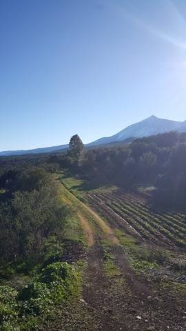 imagen 1 de Venta de finca con cuarto de aperos en  San José de los Llanos (Tenerife)