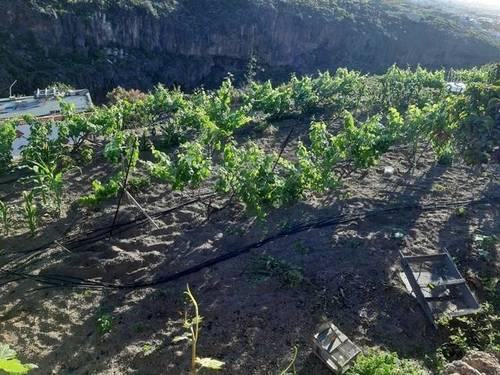 imagen 1 de Venta de terreno rústico en Güímar (Tenerife)