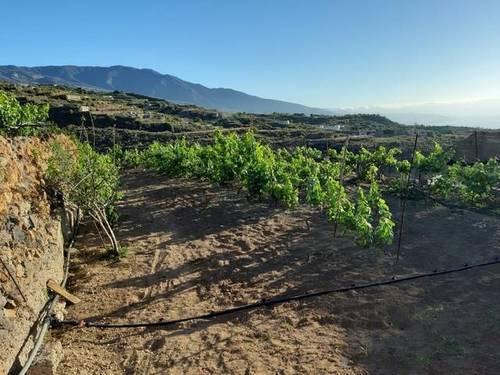 imagen 2 de Venta de terreno rústico en Güímar (Tenerife)