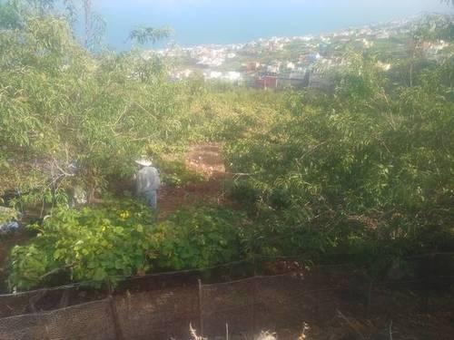 imagen 1 de Venta de finca con viñedo en Santa Úrsula (Tenerife)