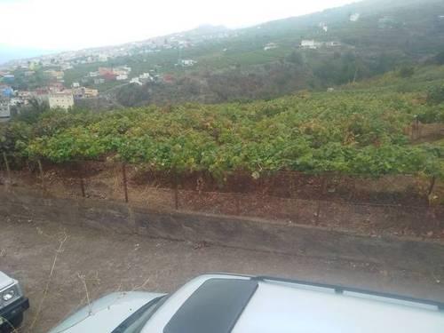 imagen 2 de Venta de finca con viñedo en Santa Úrsula (Tenerife)