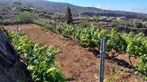 imagen 1 de Venta de preciosa finca con viñedo en La Vera de Erques (Tenerife)