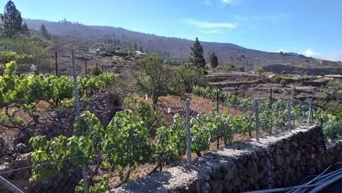 imagen 2 de Venta de preciosa finca con viñedo en La Vera de Erques (Tenerife)