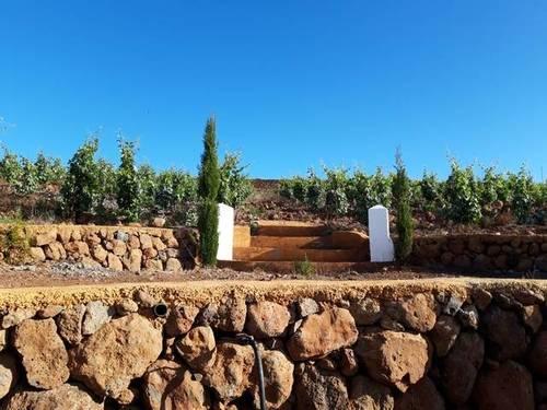 imagen 1 de Venta de finca con viñedos en Vilaflor (Tenerife)