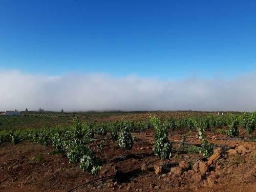 imagen 5 de Venta de finca con viñedos en Vilaflor (Tenerife)