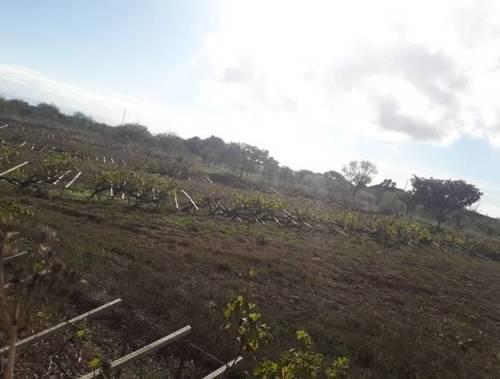 imagen 2 de Venta de finca rústica con viñas  centenarias en La Esperanza (Tenerife)