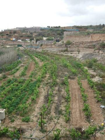 imagen 2 de Venta de terreno con vivienda, cuevas y viñedo en Fasnia (Tenerife)