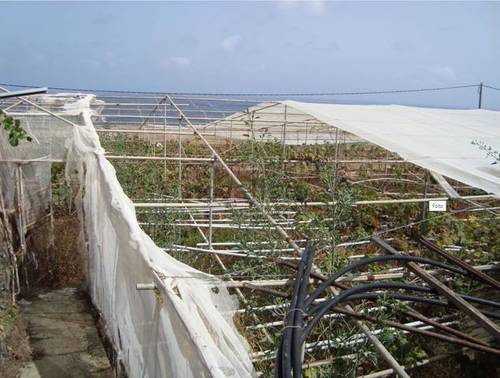 imagen 1 de Venta de finca con invernadero y vivienda en Valle Guerra (Tenerife)