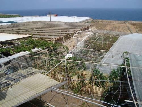 imagen 2 de Venta de finca con invernadero y vivienda en Valle Guerra (Tenerife)