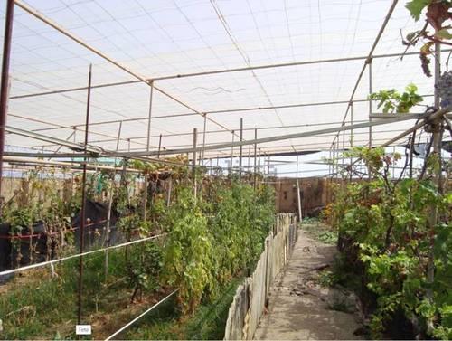imagen 4 de Venta de finca con invernadero y vivienda en Valle Guerra (Tenerife)