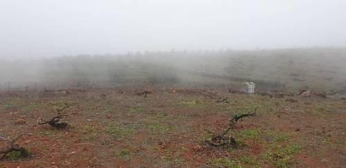 imagen 1 de Venta de finca con viñedo ecológico en Vilaflor