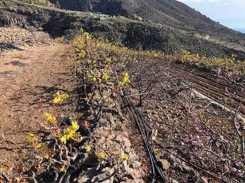 imagen 1 de Venta de terreno rústico con agua en Santiago del Teide (Tenerife)