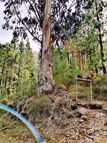 imagen 1 de Venta o cambio de terreno en ecológico en Arona (Tenerife)