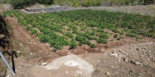 imagen 3 de Venta de terreno con frutales, luz y riego en Buenavista del Norte (Tenerife)