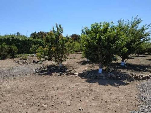 imagen 4 de Venta de terreno con frutales, luz y riego en Buenavista del Norte (Tenerife)