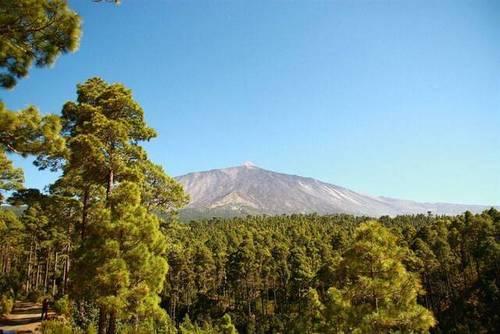 imagen 3 de Venta de terreno con frutales en La Guancha (Tenerife)