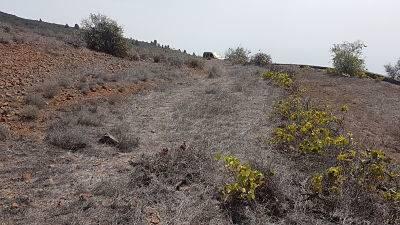 imagen 2 de Venta de terreno en Guía de Isora