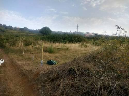 imagen 2 de Venta de terreno rústico en El Sauzal