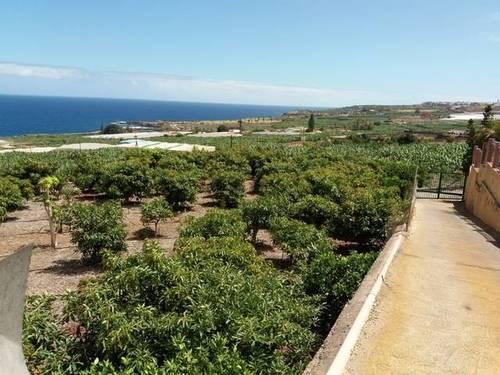 imagen 1 de Venta de finca con frutales en Buenavista del Norte (Tenerife)