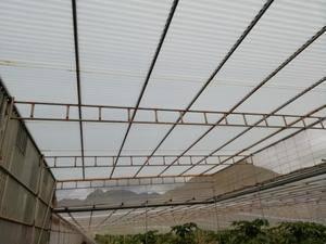 imagen 1 de Venta de invernadero en Tejina (Tenerife)