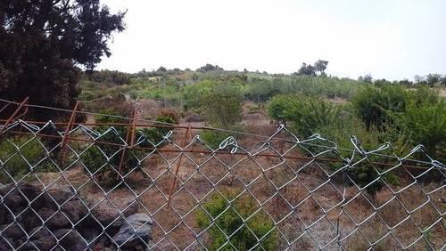 imagen 3 de Venta de finca con vivienda en El Tanque (Tenerife)