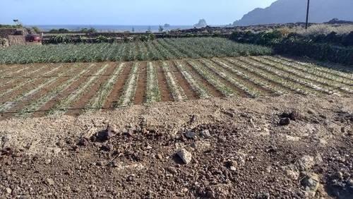 imagen 2 de Venta de finca de cultivo de piña tropical