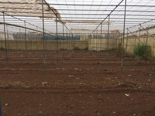 imagen 2 de Venta de invernadero ecológico en Tegueste (Tenerife)