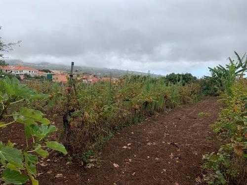 imagen 1 de Venta de viñedo con bodega en Tacoronte (Tenerife)
