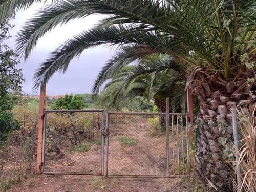 imagen 2 de Venta de viñedo con bodega en Tacoronte (Tenerife)