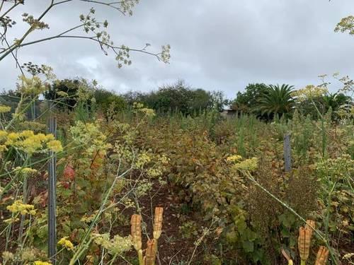 imagen 3 de Venta de viñedo con bodega en Tacoronte (Tenerife)