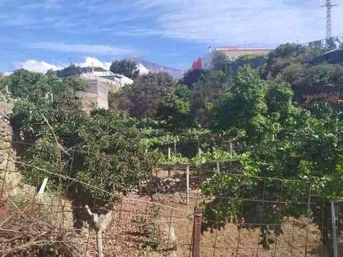 imagen 1 de Venta de terreno con frutales y antiguo lagar en Icod de los Vinos (Tenerife)