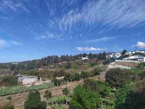 imagen 2 de Venta de terreno con frutales y antiguo lagar en Icod de los Vinos (Tenerife)