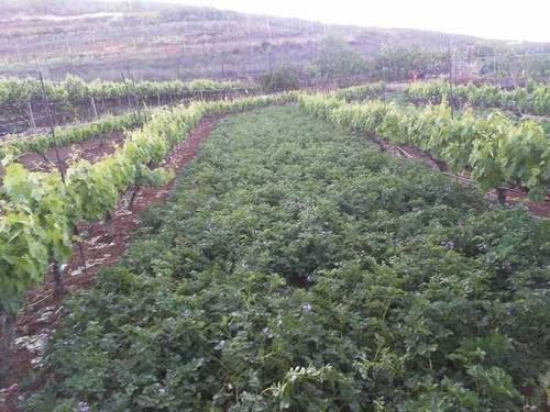 imagen 1 de Venta de finca para cultivo en Isora (Tenerife)