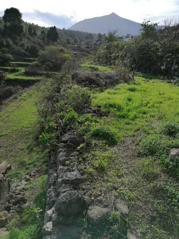 imagen 4 de Venta de terreno rústico cn cuarto de aperos en Icod de los Vinos (Tenerife)