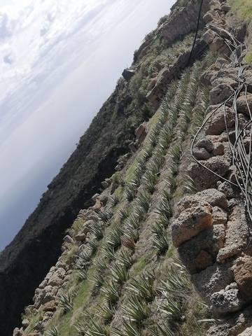 imagen 5 de Venta de terreno con casa cueva en Tenerife