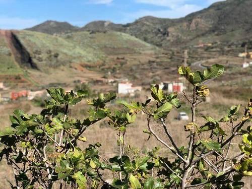imagen 2 de Venta de finca rústica ideal para plantar viñedo en Buenavista del Norte