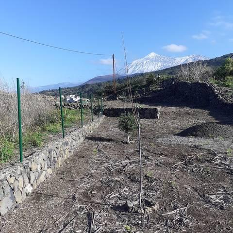 imagen 1 de Venta de varios terrenos vallados y con frutales en Fuente del Tanque (Tenerife)