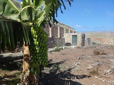 imagen 4 de Venta de invernadero en San Cristóbal de la Laguna