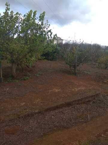 imagen 1 de Venta de finca vallada con frutales en La Esperanza (Tenerife)
