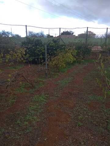 imagen 2 de Venta de finca vallada con frutales en La Esperanza (Tenerife)