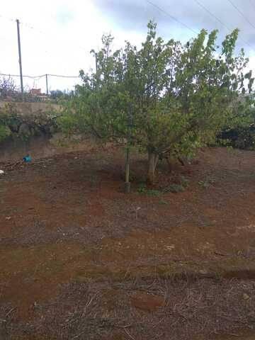 imagen 3 de Venta de finca vallada con frutales en La Esperanza (Tenerife)