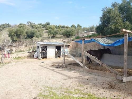 imagen 6 de Finca de recreo con piscina en Pulianas