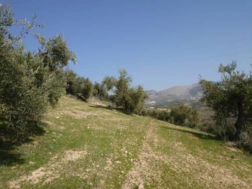 imagen 4 de Finca de olivar en Pulianas