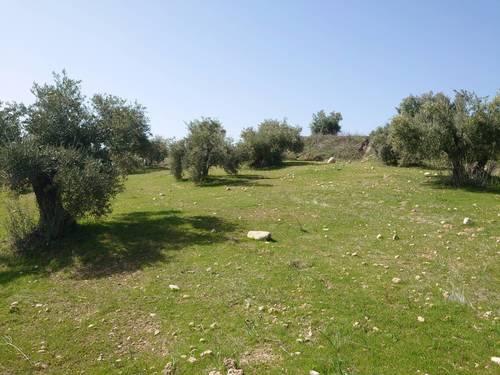 imagen 1 de Finca de olivar en Pulianas