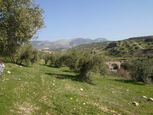 imagen 5 de Finca de olivar en Pulianas