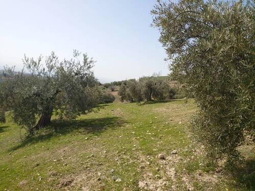imagen 2 de Finca de olivar en Pulianas