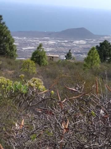imagen 3 de Venta de finca rústica en Candelaria (Tenerife)