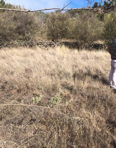 imagen 3 de Venta de finca ubicada en Reserva Natural (Tanque de Arriba)