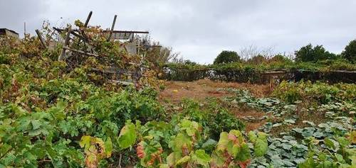imagen 2 de Venta de terreno con cuarto de aperos en La Orotava (Tenerife)